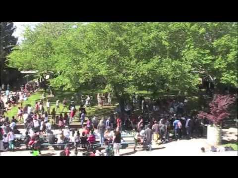 Line Dance Flash Mob